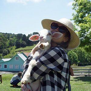 Afofando-filhote-de-ovelha-Casa-da-Ovelha